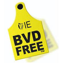 BVD Scheme